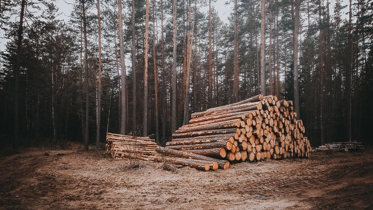 forest, lithuania, april, cute - beheroght | ello