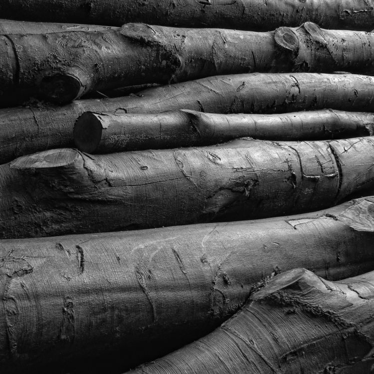 Elephants older 2010. responsiv - marcushammerschmitt | ello