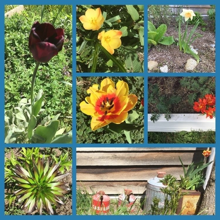 Sending Flowers garden world gr - laurabalducci | ello