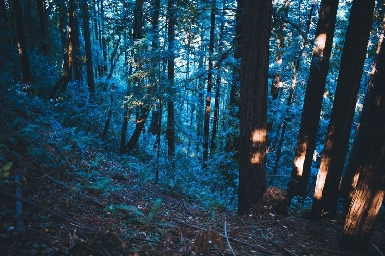 Blue Forest Upper Campus, Unive - leahberman | ello