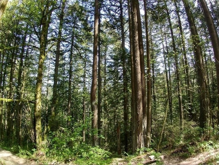 amazing trees forest - pdx - stevenhazenwilliams | ello