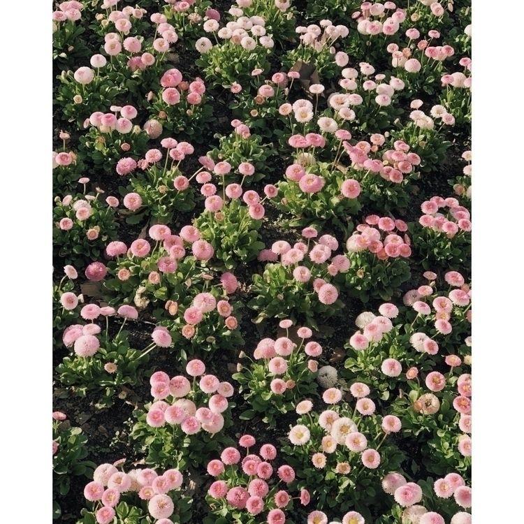 flower power - madebyfelix | ello