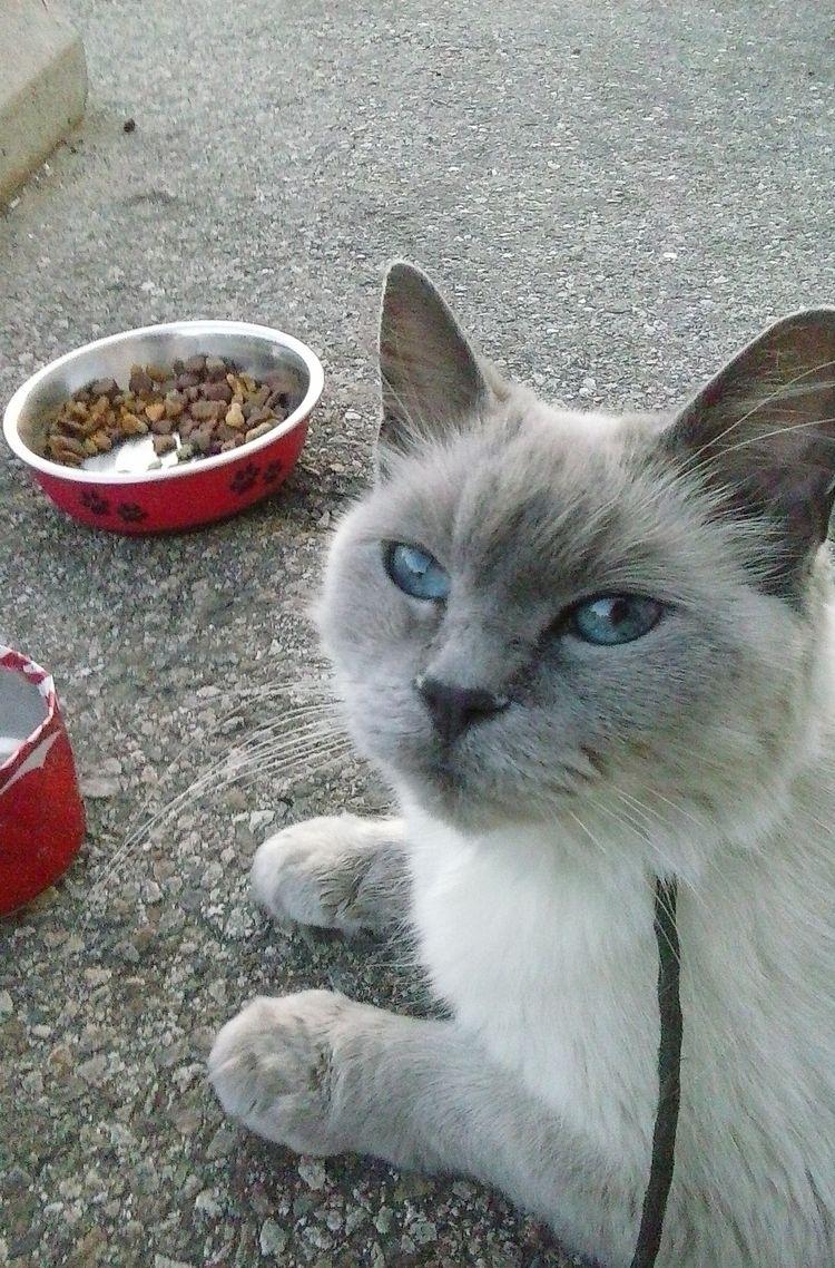 lovely friend - cat, love, photography - kut-n-paste   ello