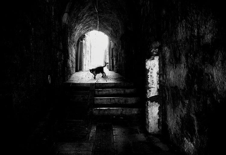 Passage. photography white - street - elhanans | ello