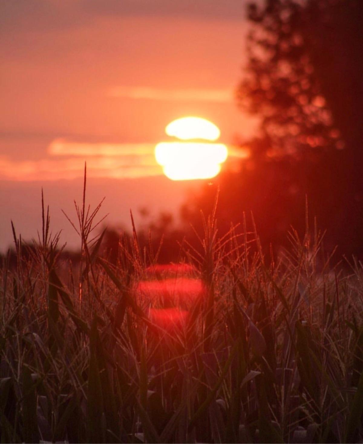 indiana, farmland, landscape - chrisflicks | ello