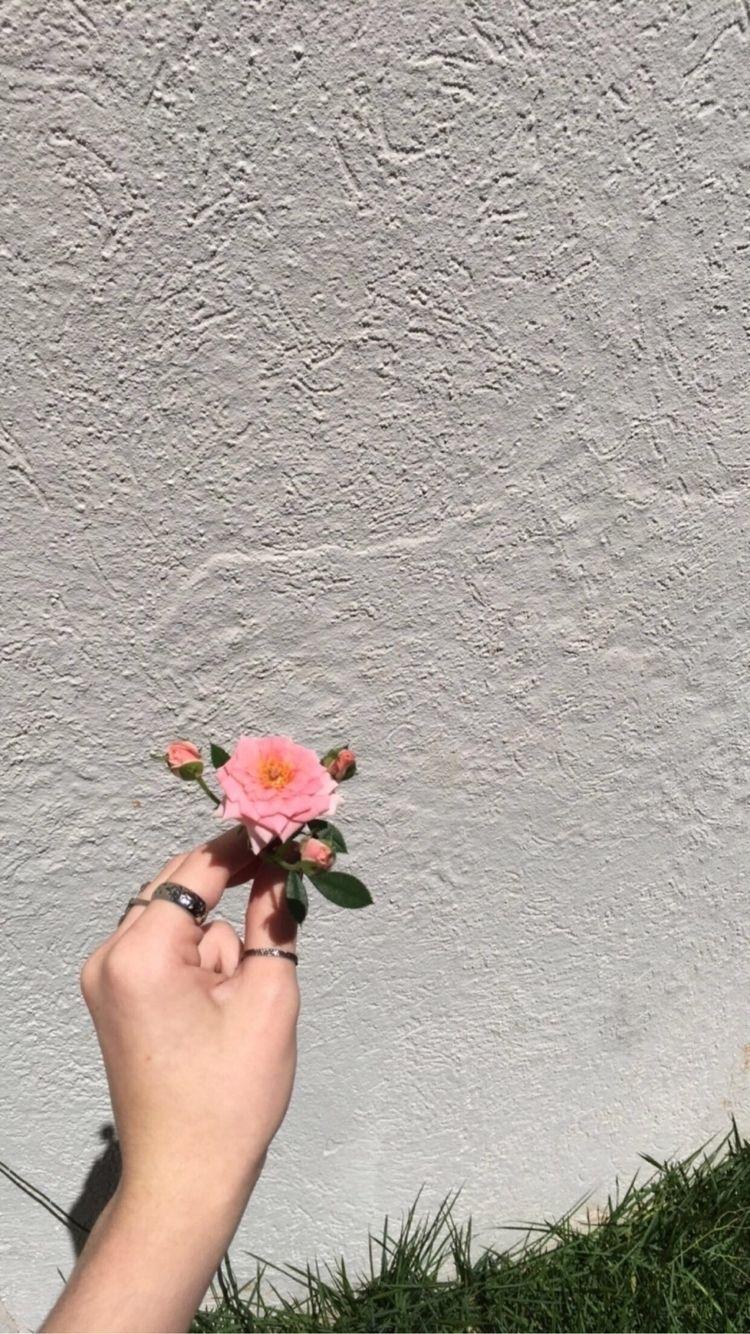 stay day admiring flower photos - surrwnder | ello