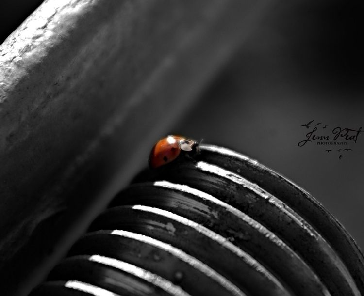 ladybug, colorsplash, photography - peatypabla | ello