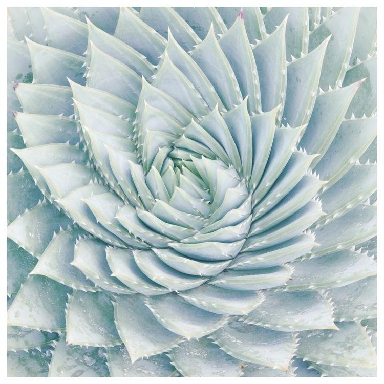 Spiral (Natural Beauty series)  - murielleetc | ello