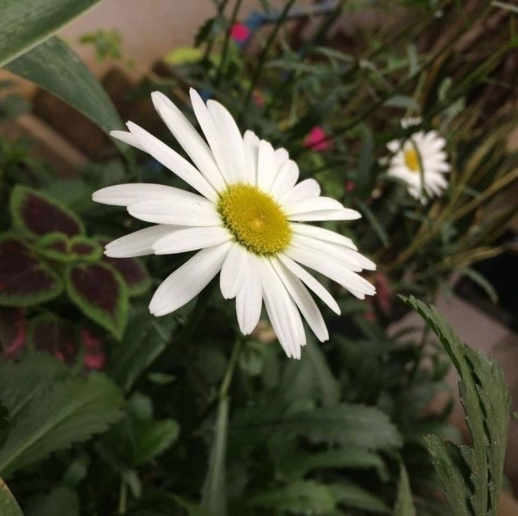 love flowers - nikon, flower, 35mm - sadgus   ello