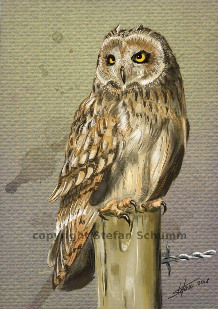 Ural Eule - owl, owls, eulen, mydailysketch - drhoofman | ello