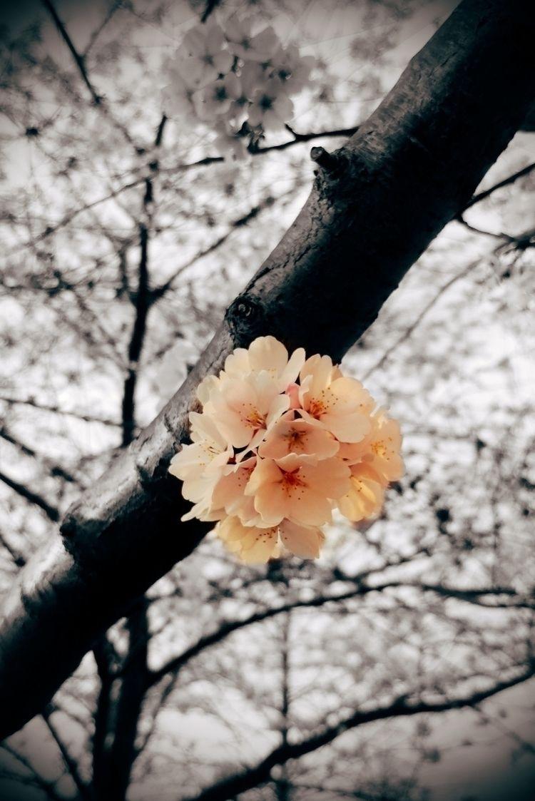 flowers, colorsplash, lgv20, nature - peatypabla | ello