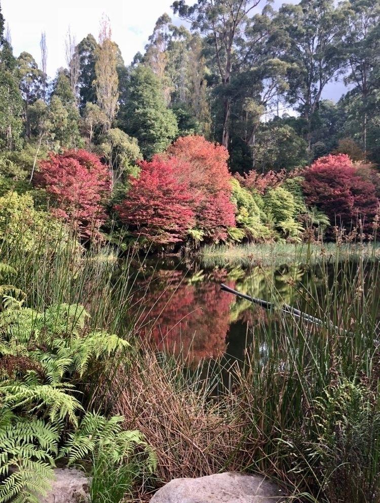 Autumn colours - Park: Dandenon - pommelstein   ello