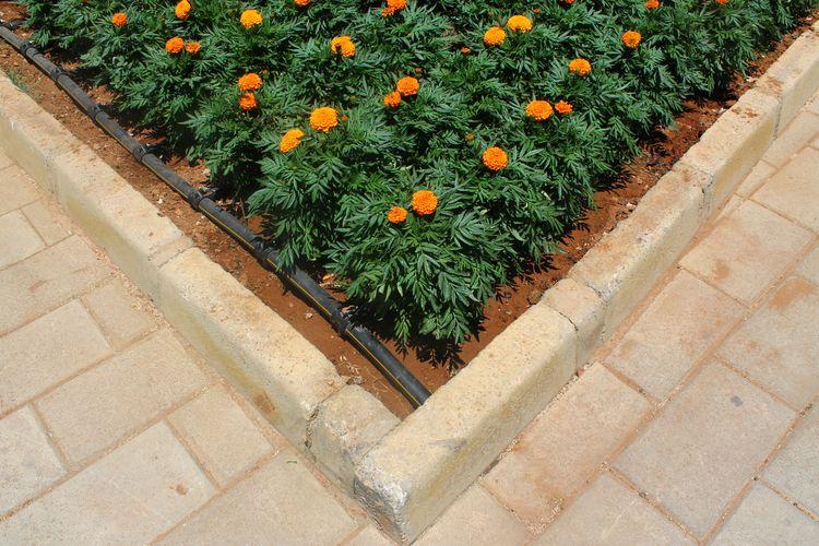 Ayia Napa-Flowers - ibenkonig | ello