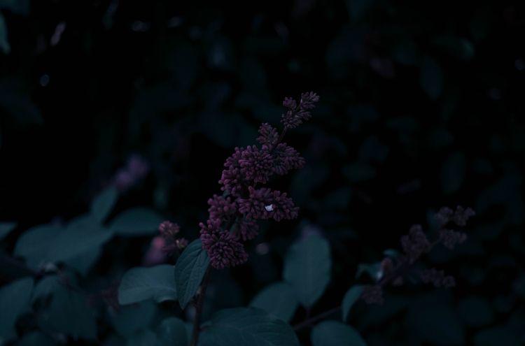 Dark botanic 2018) ____  - plants - blvckwyrt | ello