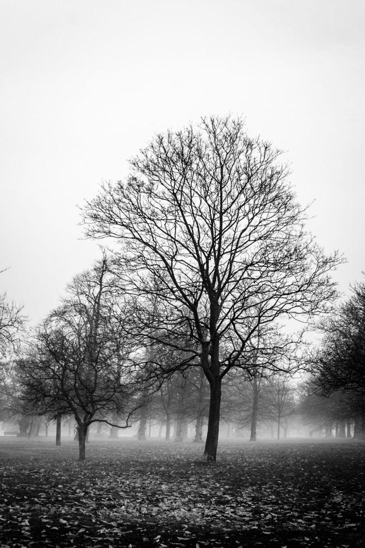 Mist | - Greenwich, park, London - fabianodu | ello