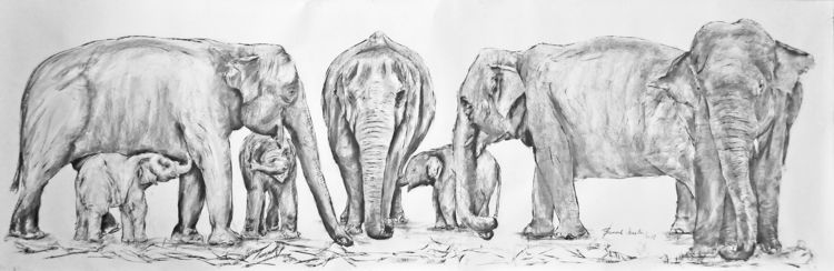 12 aug World elephants day 2018 - ben-peeters | ello