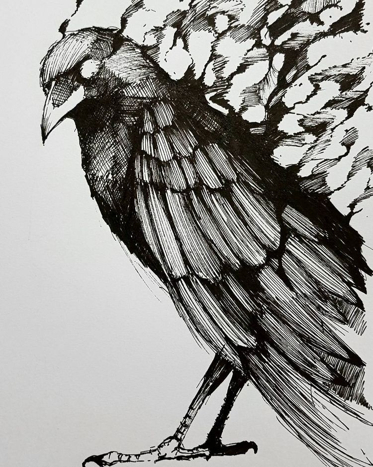 Crows love - Crow, bird, ink, sketch - tensaital36 | ello