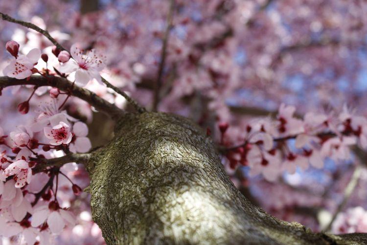 Spring finally Place: Tomelloso - jmariagarcia_fotografia | ello