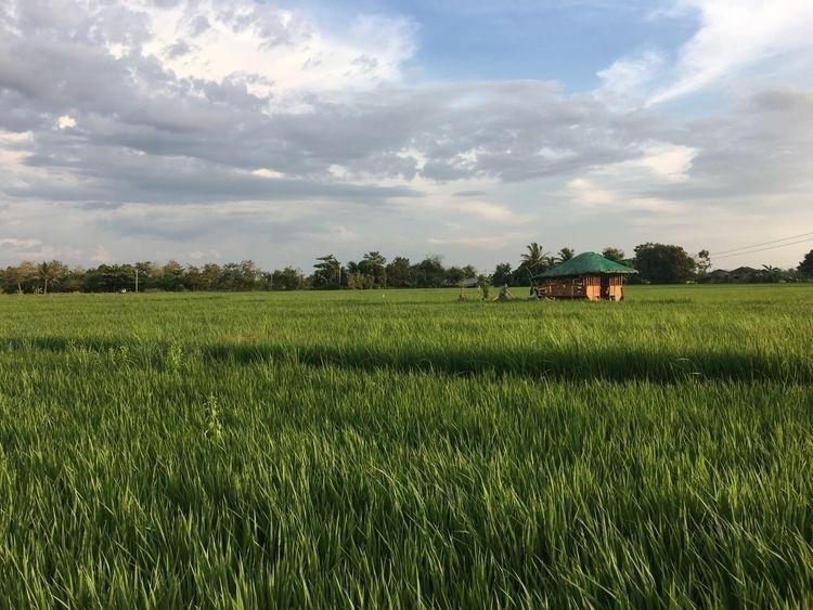 Unli-rice - Pangasinan, Philippines - mikezafra | ello
