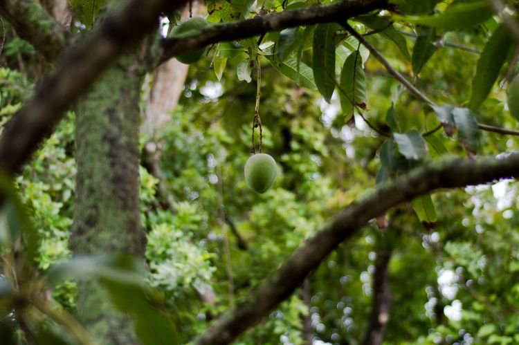 mango season - cinderblast | ello