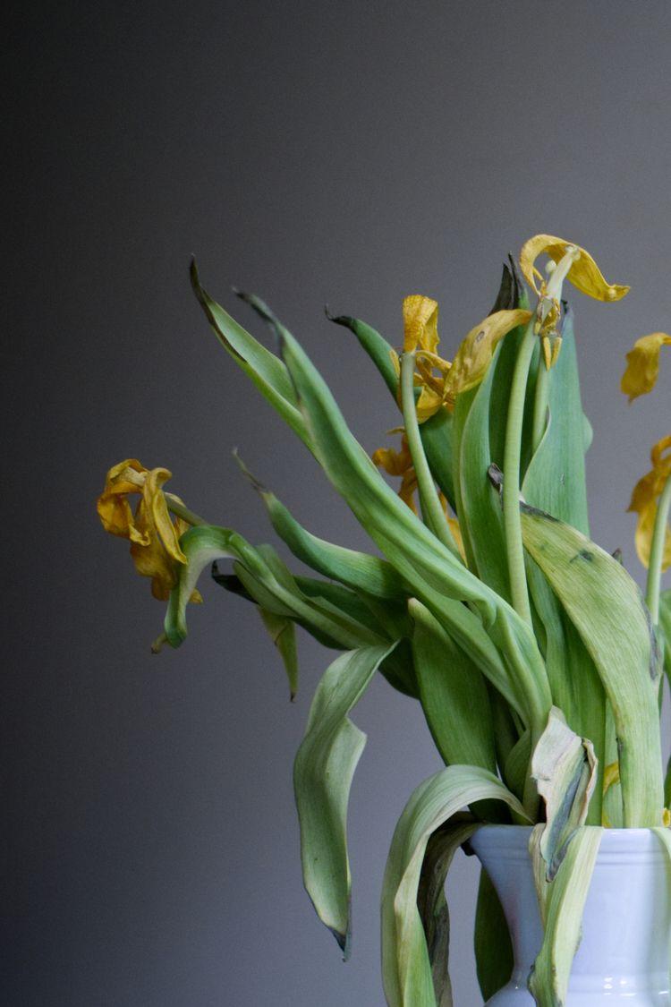 flowers, naturamorta, stilllife - christianfregnan | ello