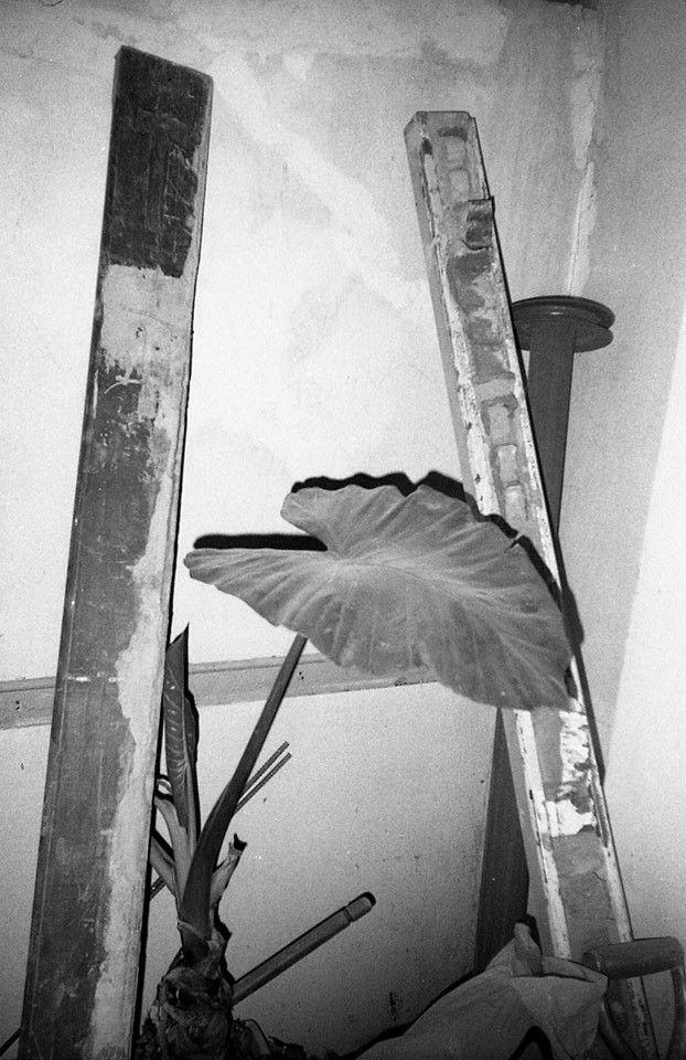 Fotografía 35 mm Byn toma direc - maroevicmatias | ello