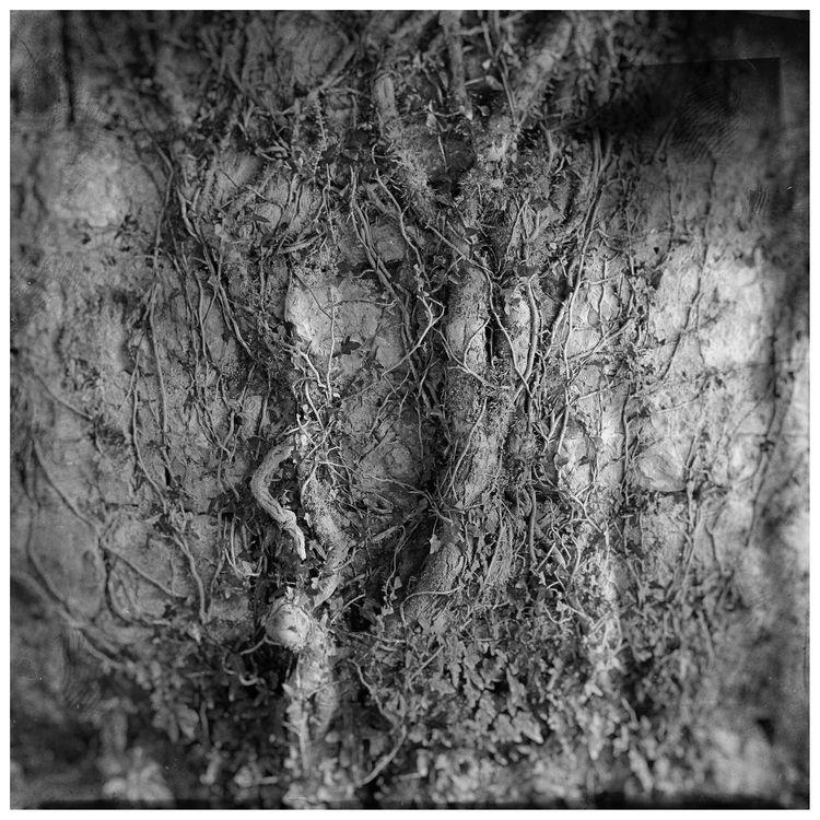 2017. Photo SVIATOSLAV. Tree Wa - sviatoslavs | ello