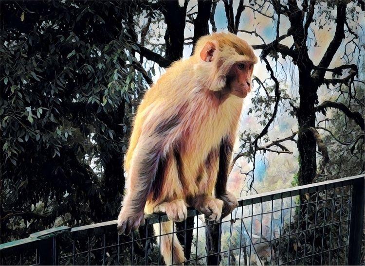 Monkey mountain - davesag | ello