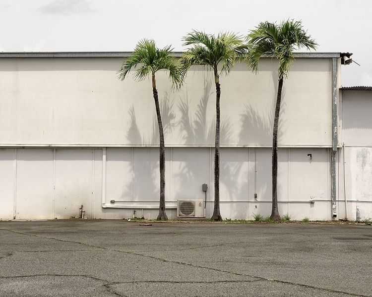 Palm Trees - honolulu, hawaii, newtopographics - shanesakata | ello