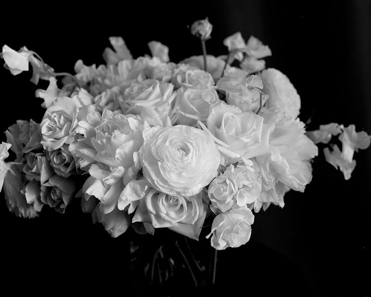 Flowers - 4x5, largeformat, tmax100 - michaelmillerstudio   ello