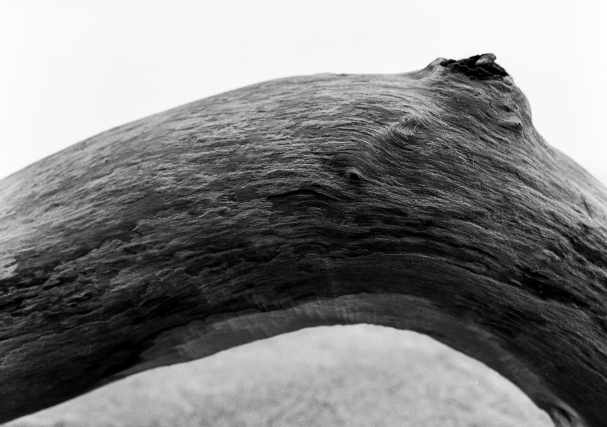 Driftwood - mediumformat, ilfordfilm - junwin | ello