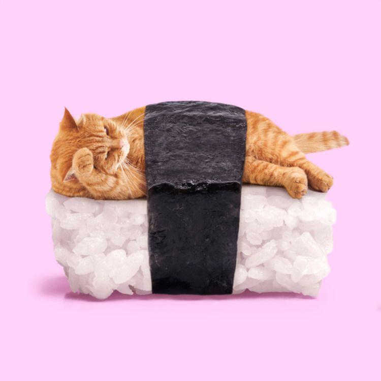 SUSHICAT - sushi, cat, thenewpopart - paulfuentes_design | ello