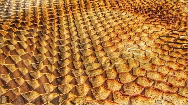 Honeycomb Photo Trevor Brown - trevorbrown - trevor_brown_artist | ello