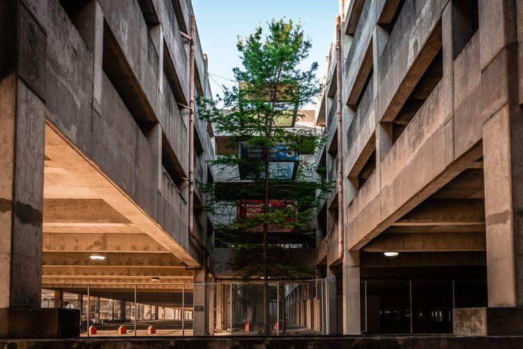 Growing Concrete lone tree grow - mattgharvey | ello