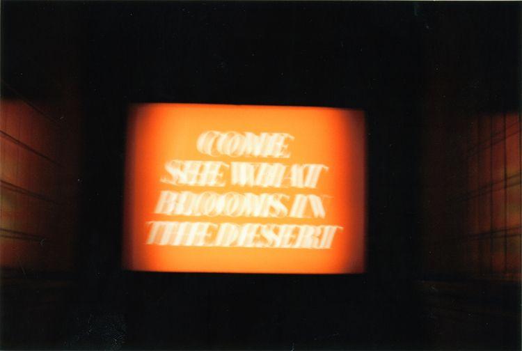 Diane Knarr - Blooms Desert.  - Ektar100 - epitesz | ello