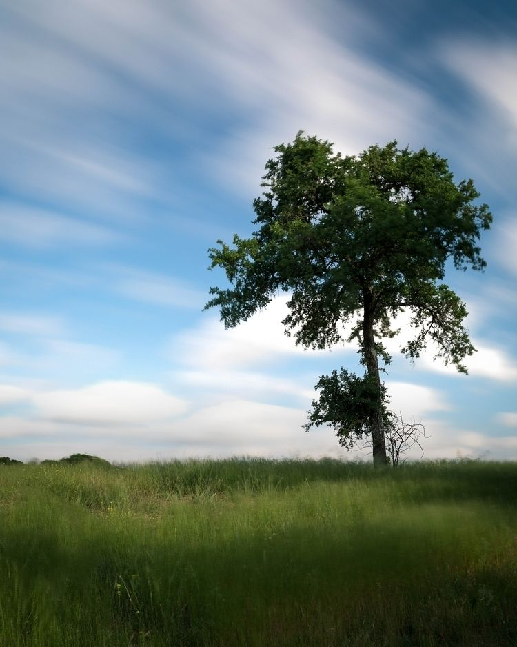 Long exposure single tree field - toddhphoto | ello