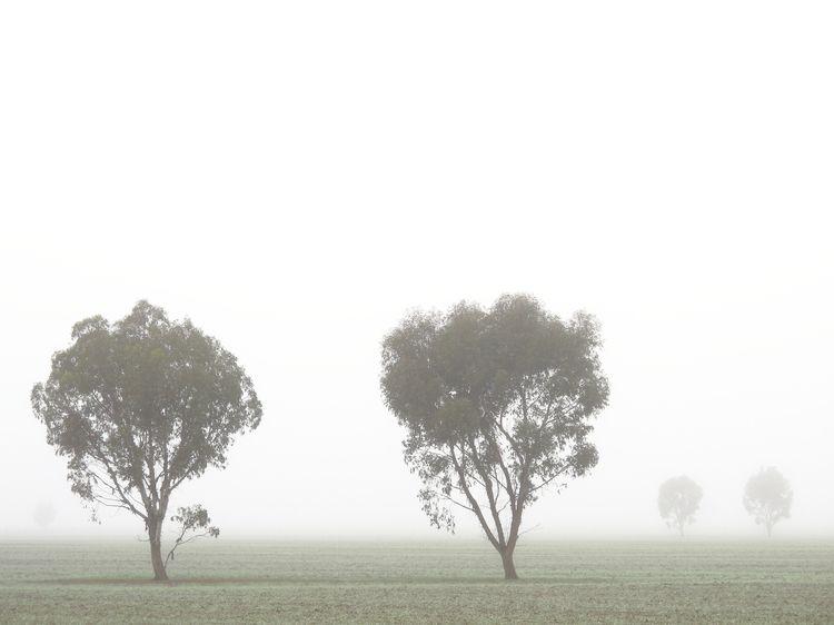 Horsham, Australia - jonlanbroa   ello