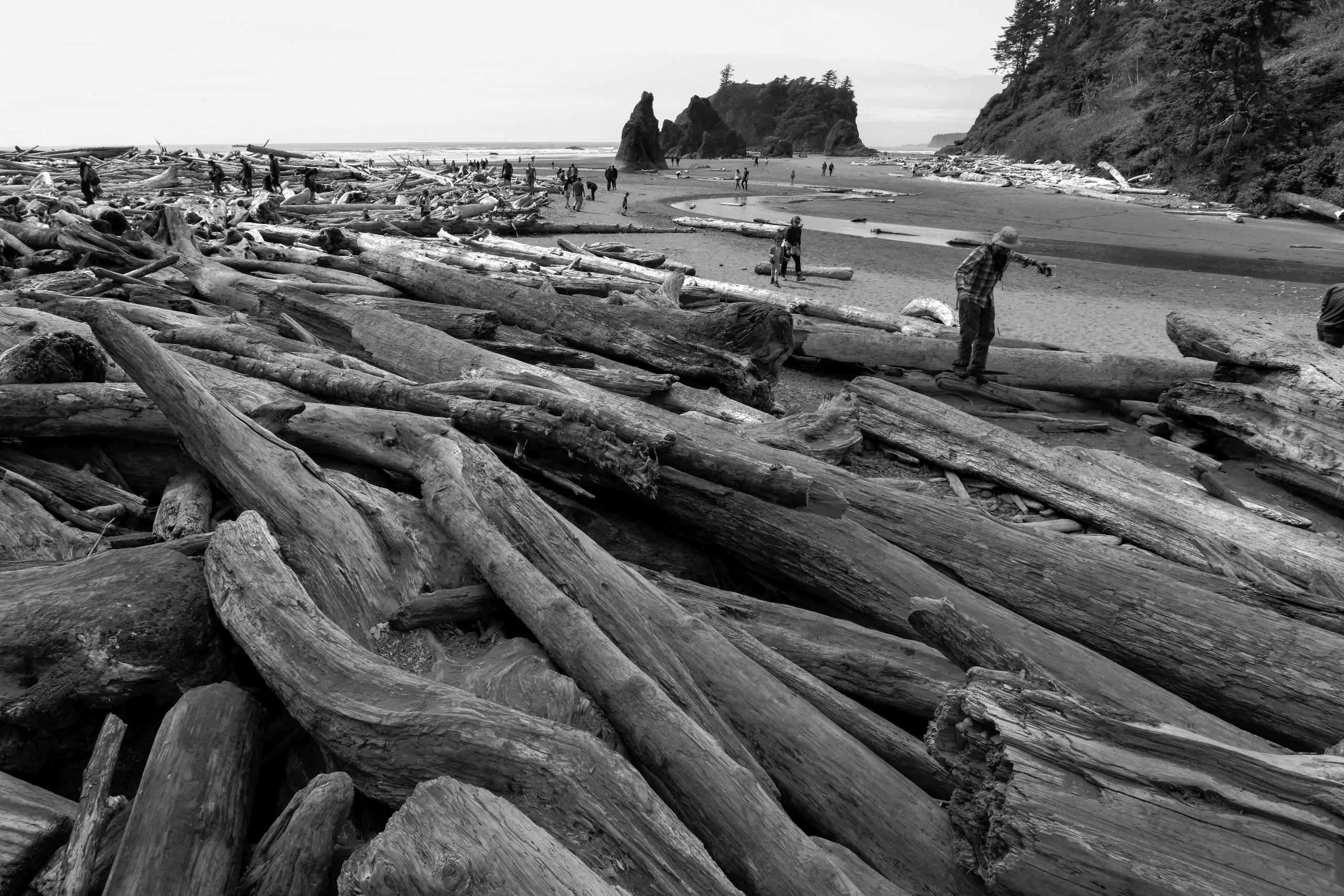 Beach - Ruby, Washington, nature - usnrmustang | ello