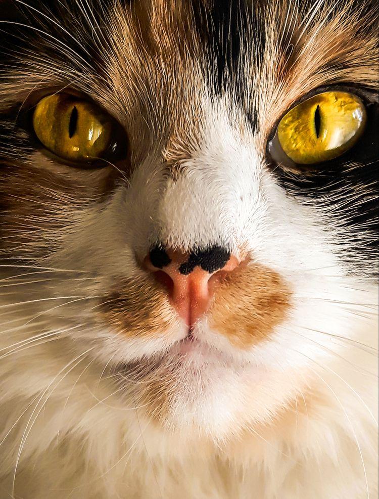 mentioned older cat. love botto - martinainwonderland | ello