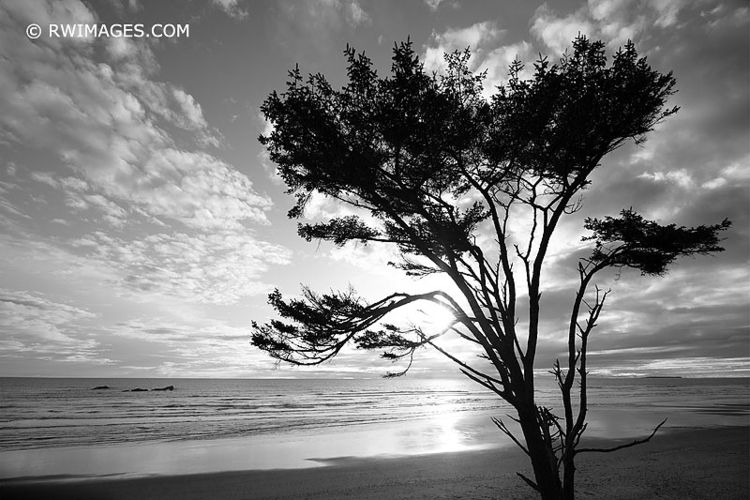 KALALOCH BEACH SUNSET OLYMPIC N - robert-wojtowicz-photography | ello