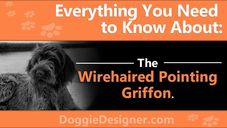 Complete  - Wirehaired, Pointing - doggiedesigner | ello