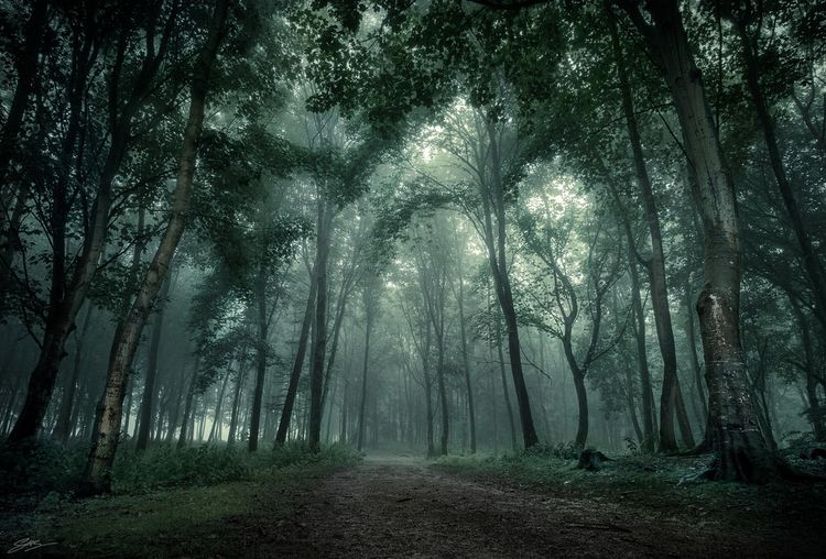 Walk Woods walk dark misty air - elpe474 | ello