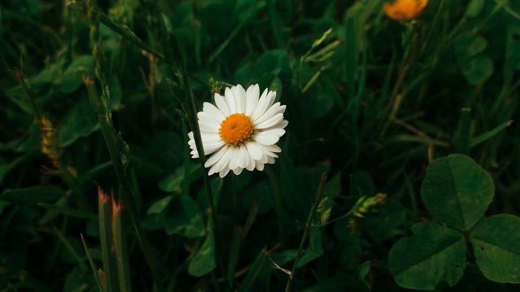 natureloversgallery, flower, flowers - beheroght | ello