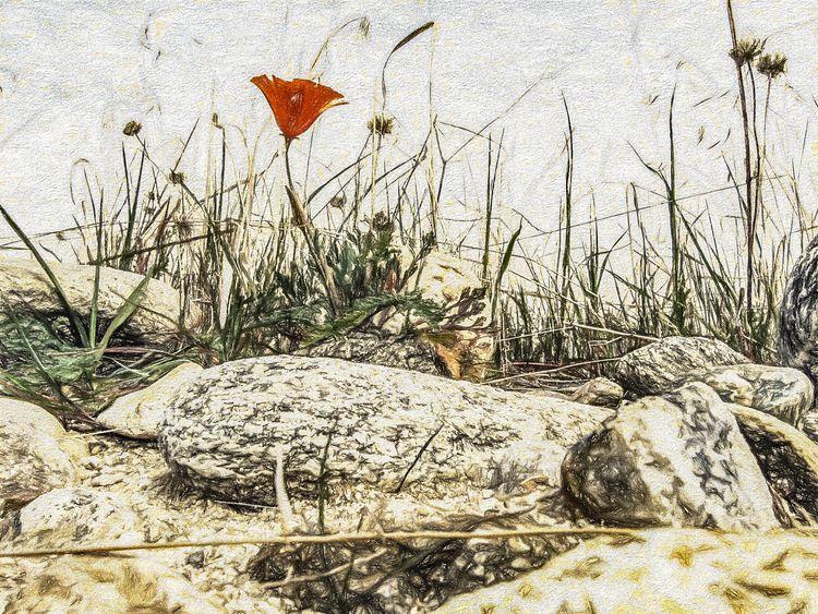 Flower Series David Seibold pho - davidseibold | ello