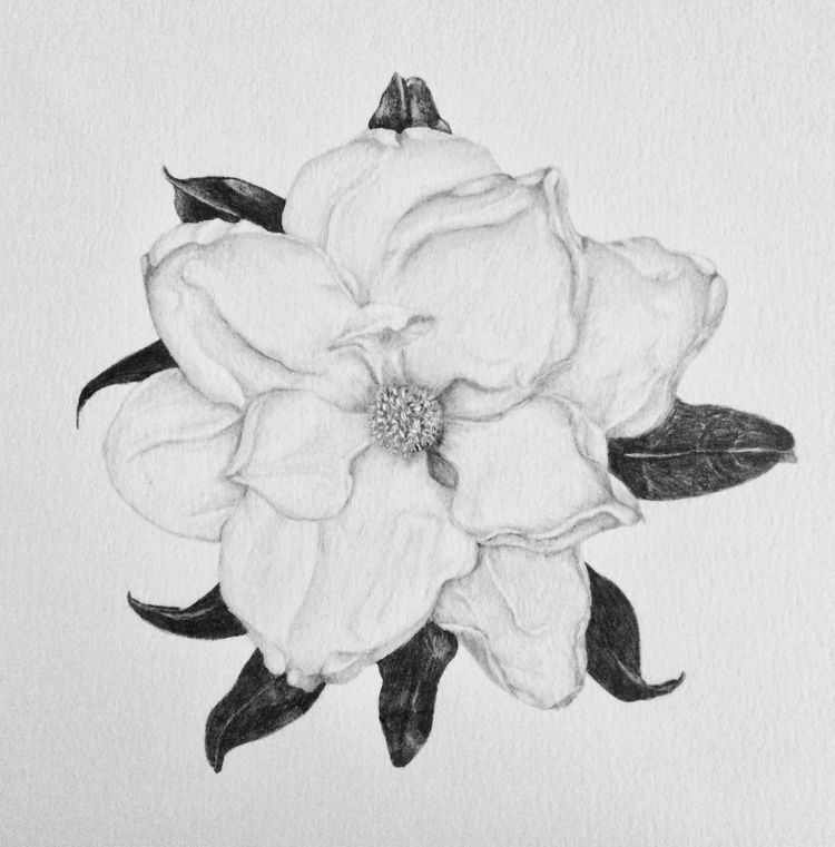 Magnolia Grandiflora Pencil pap - sofiasantos | ello