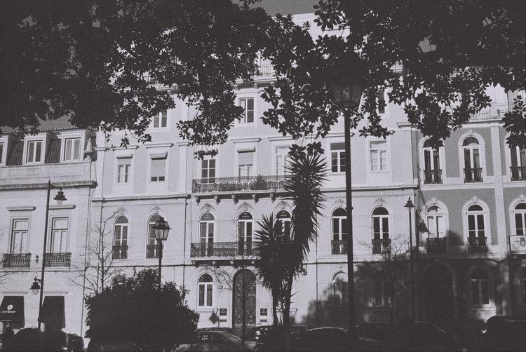 Lisbon Edits, 3 Príncipe Real - filmphotography - ferreira-rocks | ello