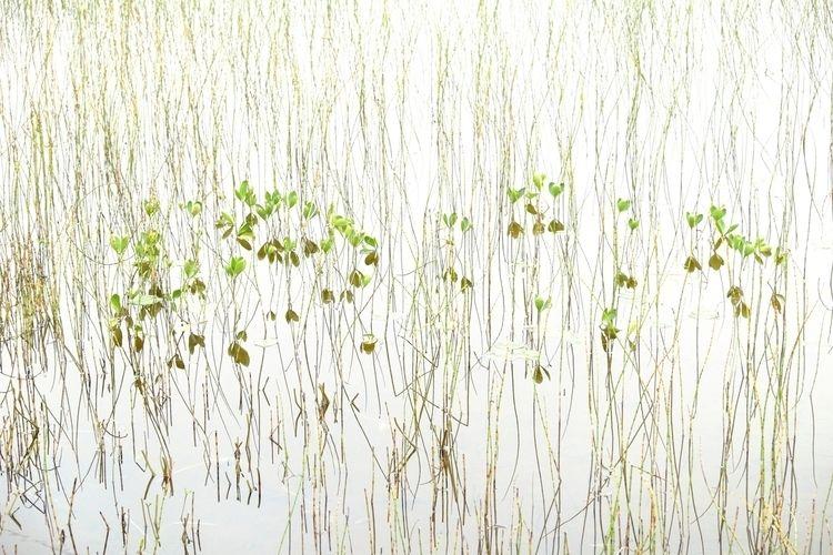 Inspirational Marsh. Lemmenjoki - jonlanbroa | ello
