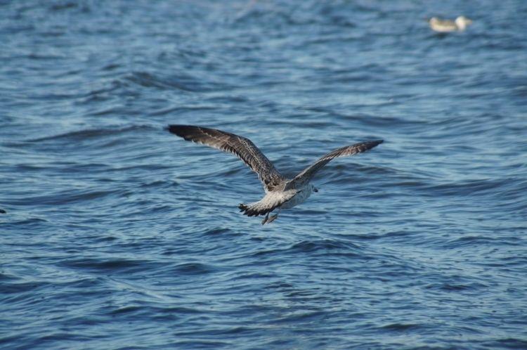 Venezia, birds, birds - marco_legend | ello