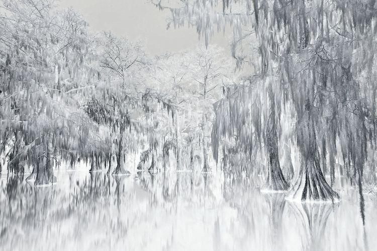 american swamp / ink pencil ske - voiceofsf | ello