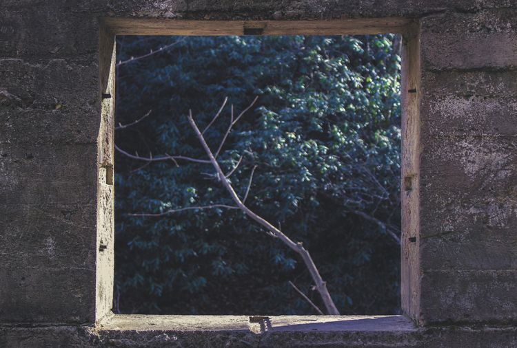 hiked window woods - hiking, WHPShapes - parkerbruer   ello